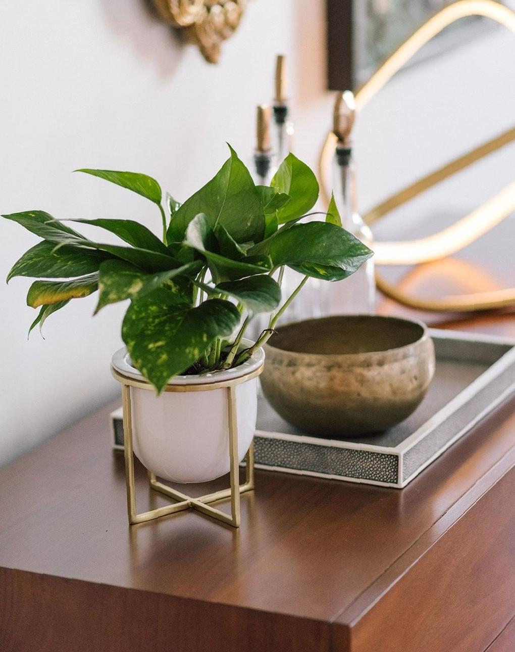 Gorgeous Indoor Plants Idea Images for Decoration plants, indoor plants, indoor plants ideas, indoor plants images, gorgeous indoor plants